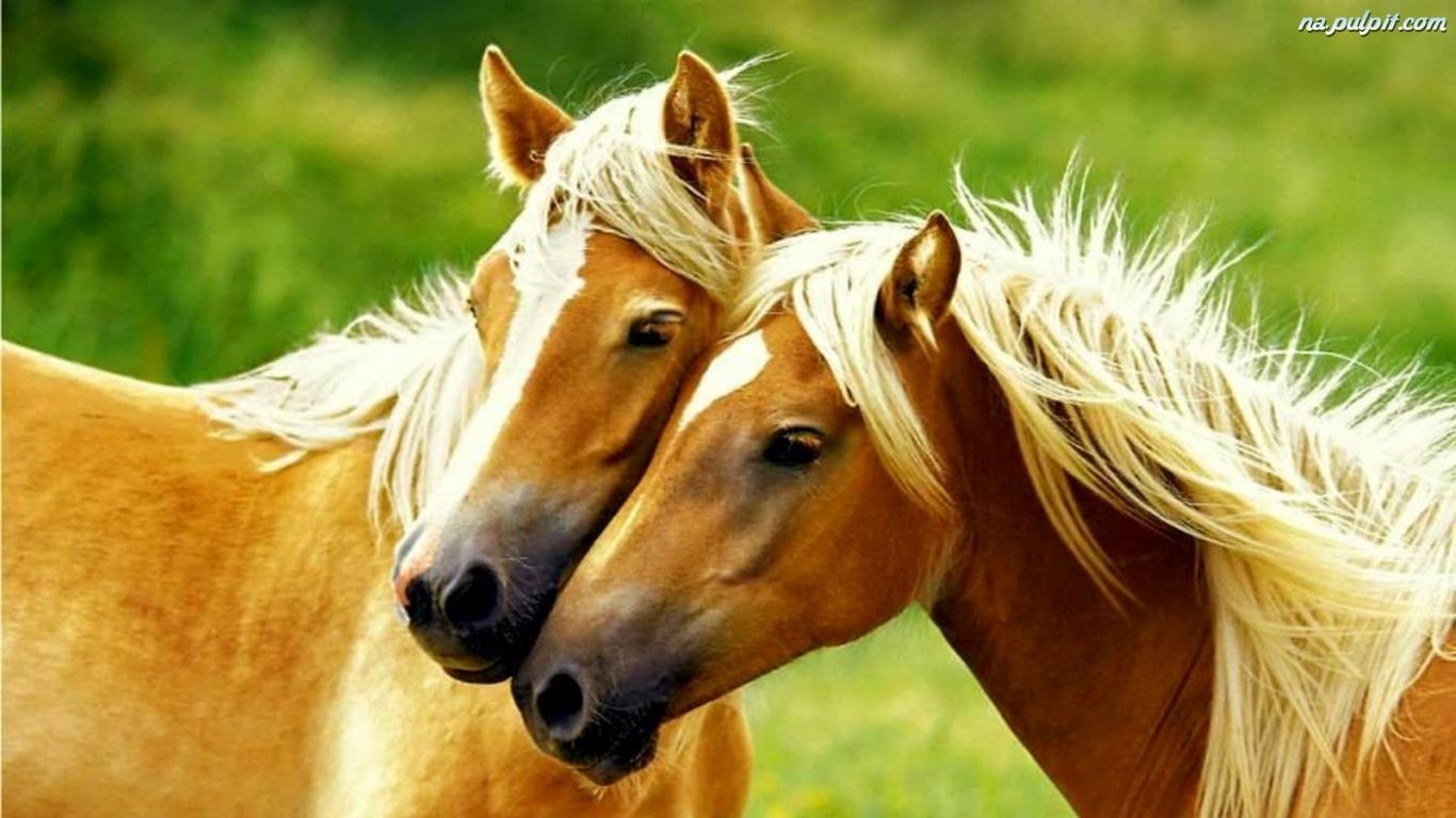 konie-6.jpeg